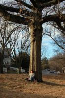 The Tree by the Parkway by Baron-Mookie