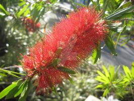 Red Fuzz on a Green Plant by MrJTC