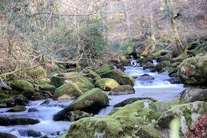 Up Stream from Shaugh Prior by matt-h-mitchell