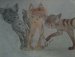 Ashfur or Brambleclaw? by AshbreezeTheKitty