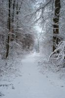 Snowscape Stock 77 by Sed-rah-Stock