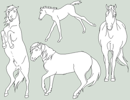 Feral Horse Lines by orengel