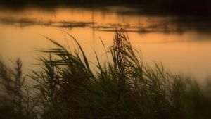 Blurred grass by Patguli