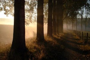 misty path by rhipster