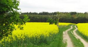 a yellow field by AlenaKrause