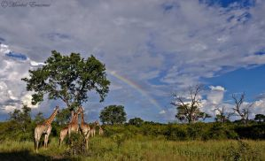 Journey to the Rainbow by MorkelErasmus