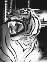 black and white tiger by peaceocake