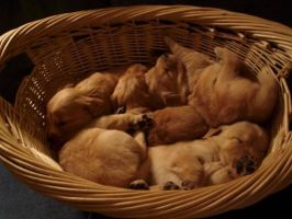 Puppies in a basket by mouseinstinct