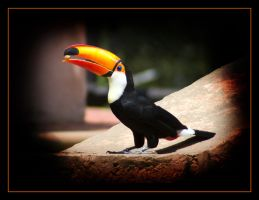 Monte's Tucan by H6RM