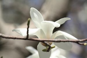 A white flower in China by Cathhhhz