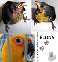Bird pack I by KW-stock