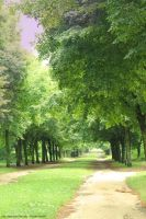 I Love the Trees by Cocotte-Vero91