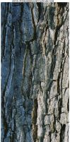 Bark Texture 7 by webgoddess
