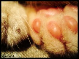 Paws by genelle