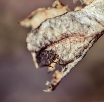 Decayed Leaf by WickedOwl514