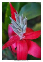 Bromeliad 3 by Dr-Benway