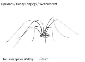 Spider for  Lexi's Spiderwall by Lanios