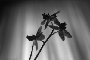Orchidaceae 2 by redcharcoal
