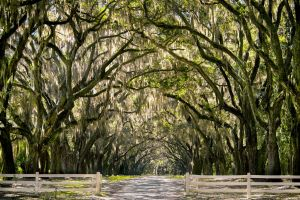 Wormsloe Plantation 2 by rctfan2