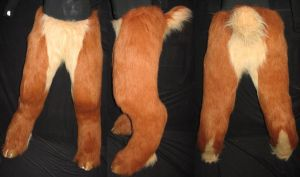 Fox Fawn Legs by Monoyasha