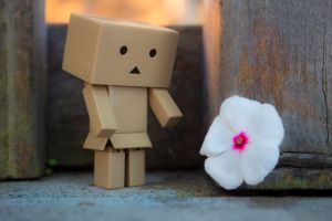 Danbo Flower by A-Glass-Brightly