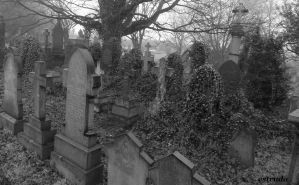 The Ivy Takes Over The Cemetery by Estruda