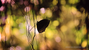 butterfly.. by samantha4