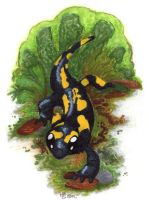 How to train your Salamander by shrubrabble
