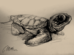 Baby Sea Turtle by ISHAWEE