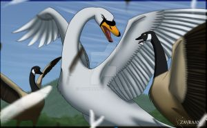 Swan Attack by zavraan