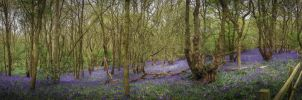 Bluebell Hill by waggysue