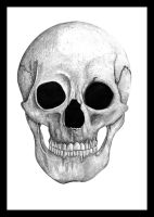 skull drawing 02 by eyadz