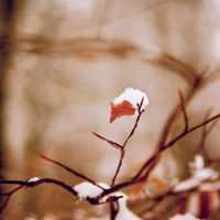 Un temps hivernal by Somebody--else