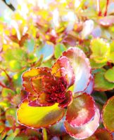 Pretty red and green leaved plant by IamNasher