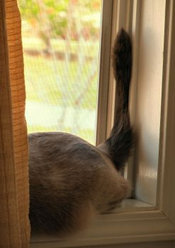 Silly Kitty.. Tracks are for windows no tails. by SassyMissTallulah