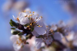 Spring 5 by KSMPhotography