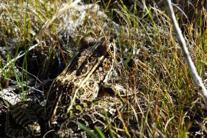 frog resting under the sun by hsbzh