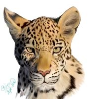 Leopard Color by Joava
