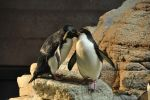 Penguin Preen by the-night-fox