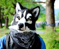 Darcus the black_n white wolf by charismatic1983