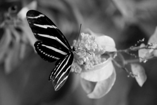 Butterfly Not Brundle-fly by Norn10