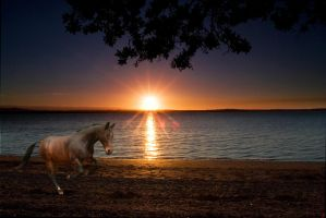 Gallop on the beach by TheRavenPhotography