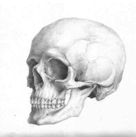 Skull anatomy | April 29, 2010 by uzorpatorica