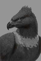 After Earth Eagle WIP by comixqueen