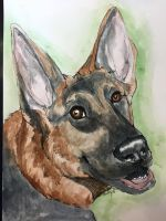 German shep by Koiley