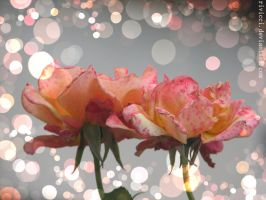 Roses by Rivicci
