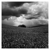 The rain is coming by proac150