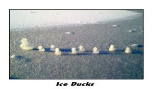 Ice Ducks by mad1dave