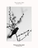 the lonely bird by mooode1