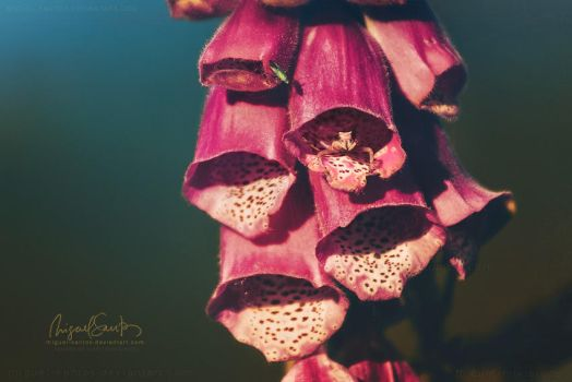 Foxglove Home by Miguel-Santos